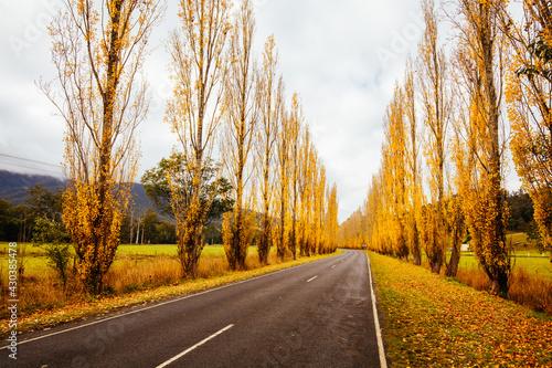 Photo Gould Memorial Drive in Marysville in Australia