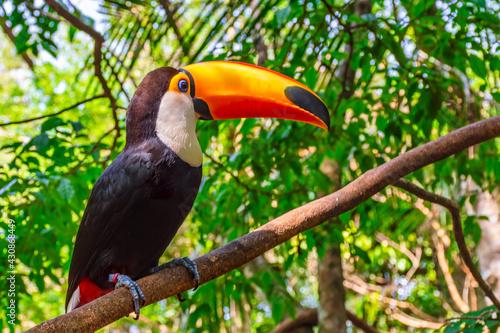 Obraz na plátně toucan bird