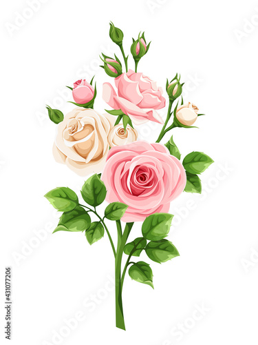 Vector pink and white roses isolated on a white background.