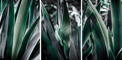 Fotografia leaves of garden flowers, abstract background, triptych.
