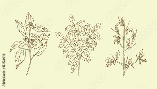 Photo Set of hand drawn essential oil plants