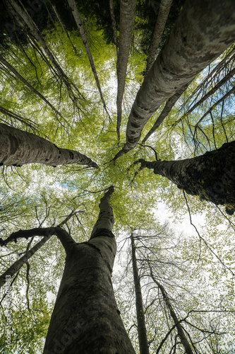 Photo green treetop in the forest
