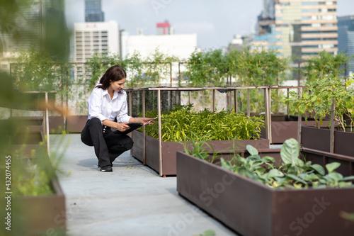 Canvastavla Portrait of female gardener working in Rooftop vegetable garden at the modern building