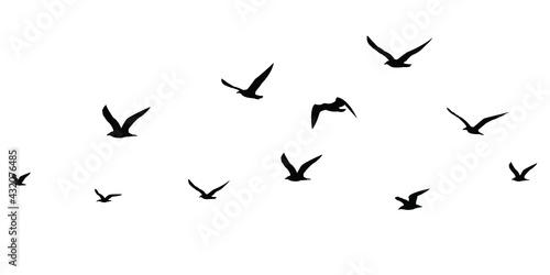 Valokuvatapetti silhouettes of birds set
