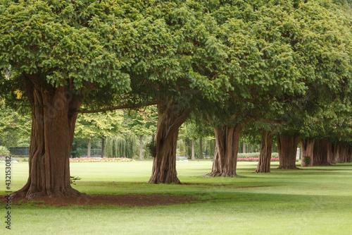 Tela Row of trees in an urban park in London, UK