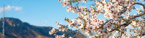 Foto Blooming almonds