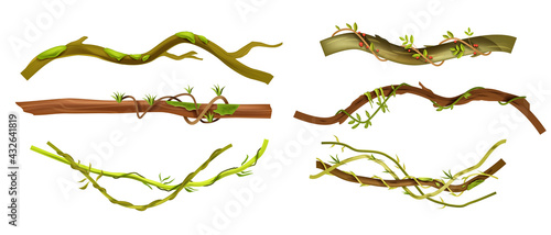 Foto Jungle liana vector tropical set, vine branches, leaves, botanical exotic illustration isolated on white