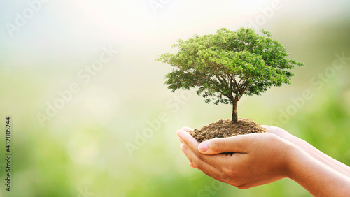 eco earth day concept. hand holdig big tree growing on green background