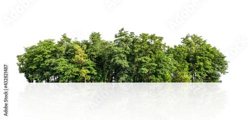 tree line isolate on white background Fototapeta