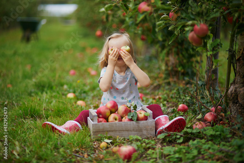 Obraz na plátně Adorable toddler girl picking red ripe organic apples in orchard or on farm on a