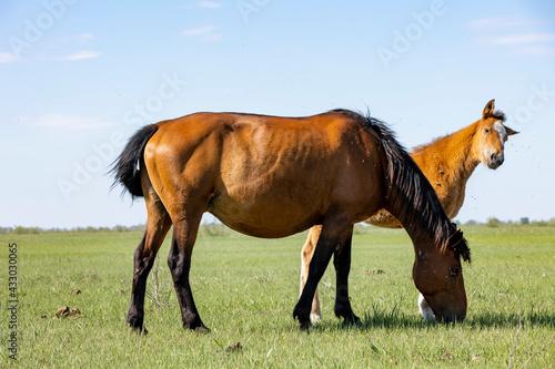 Murais de parede horse and foal walking in nature