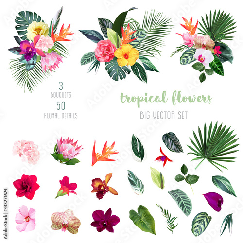 Wall mural Exotic tropical flowers, orchid, strelitzia, hibiscus, protea, anthurium, palm, monstera