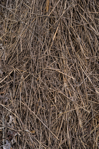 Photo Surface of old dry grass in a stack.