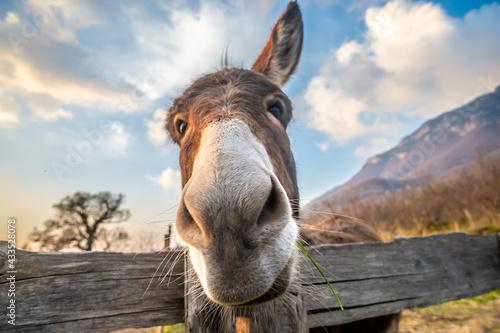 Photo portrait of a donkey
