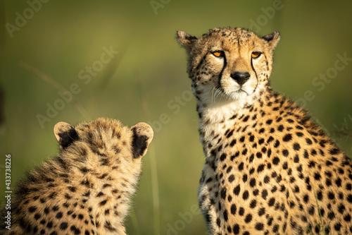 Close-up of cheetah and cub sitting down Fototapet