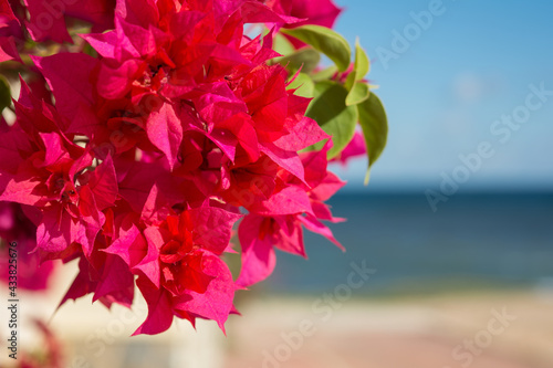 Photo Red bougainvillaea flowers in front of Mediterranean sea background