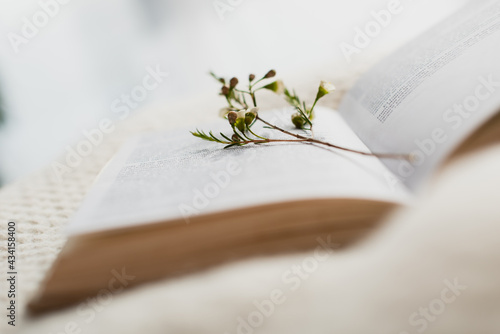 blooming flowers in blurred open book on bed
