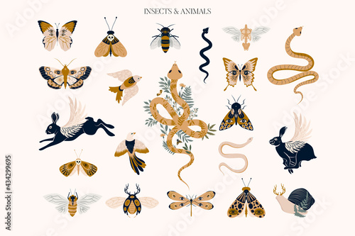 Set of mystical animals and insects clipart. Editable vector clipart illustration.