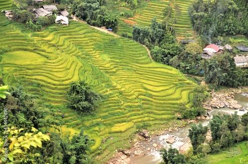 Obraz na plátně Scenic View Of Rice Paddy Field