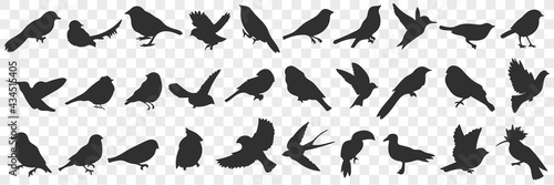 Cuadros en Lienzo Silhouettes of birds doodle set