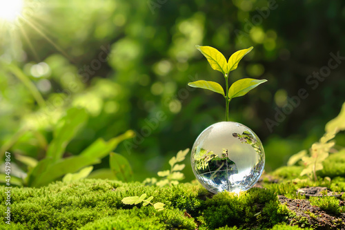 Wallpaper Mural lass globe ball with tree growing and green nature blur background