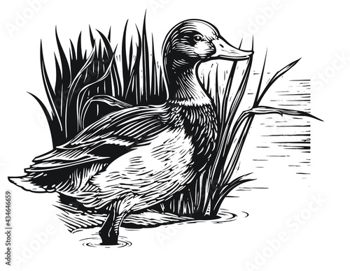 Valokuvatapetti illustration of a duck