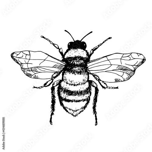 Fotografia, Obraz Vector engraving illustration of honey bee isolated on white background