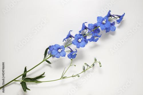 Photo Delphinium flowers on white background