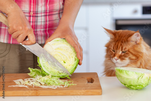 Obraz na płótnie A woman cutting a cabbage on a cutting board while a red maine coon cat is watch