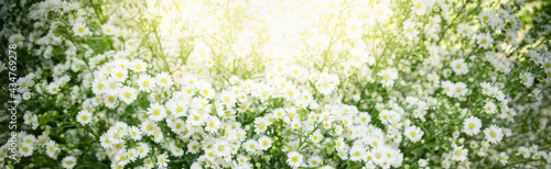 Fotografie, Obraz Nature of flower in garden using as cover page background natural flora wallpape