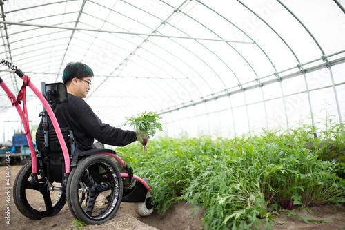 【車椅子】(男性)ビニールハウス農園 Fototapet