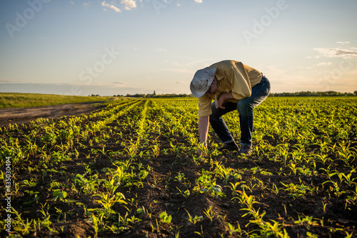 Obraz na plátně Senior farmer is standing in his growing corn field