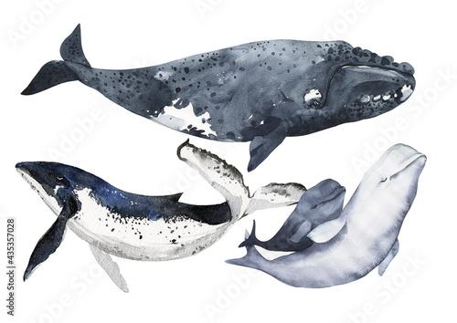Foto Set of cetaceans painted in watercolor
