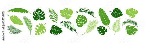 Summer palm leaf vector green plant, exotic nature set isolated on white background. Jungle illustration