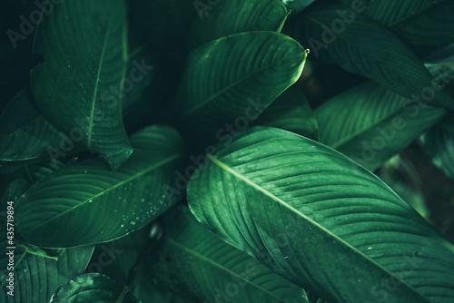 Naklejka na szafę abstrakcyjny wzór tropikalnej rośliny liści w wiosennym ogrodzie