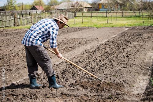 Obraz na płótnie person planting a potato,  drag the earth with a rake