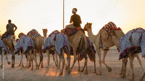 Obraz na płótnie Ash-Shahaniyah, Qatar- March 21 2021 : Jockeys taking the camels for walk in the camel race tracks