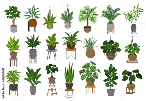 Photo collection of different decor house indoor garden plants in pots and stands grap