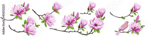 Obraz na plátně Set of blooming magnolia branches