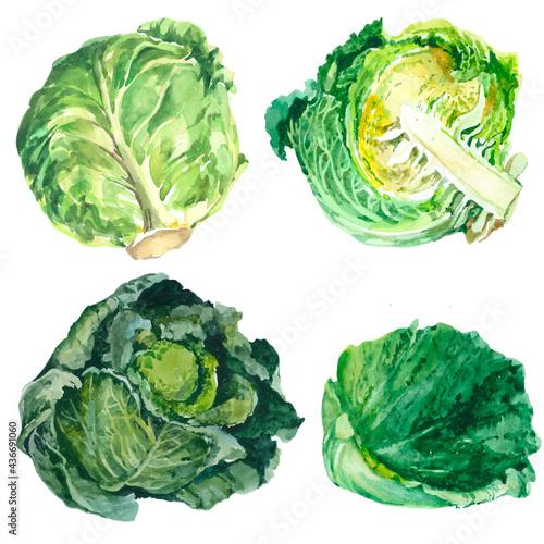 Photo Set cabbage isolated on white background