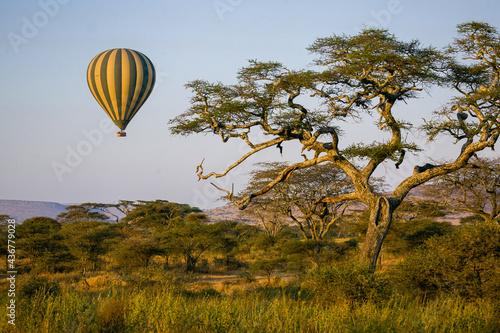 Fotografia Hot air balloon floating over an acacia tree in Serengeti National Park