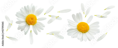 Fényképezés Chamomile or camomile with flying petals set isolated on white background