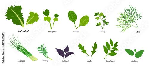 Fotografia Set of fresh green leafy vegetables, salad dressings in flat style, infographics