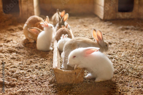 Canvas Print rabbits on the farm in the aviary