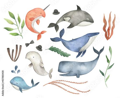 Sea animals  whale watercolor illustration set Fototapete
