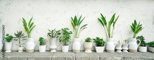 Fotografie, Obraz Various difference types of green plants in pots almost white colored with white