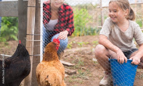 Fotografie, Tablou Little girl feeding chickens in hen house - helping parents