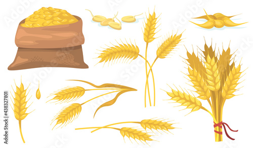 Fotografia Yellow ripe wheat bunch, spikes and grains flat item set