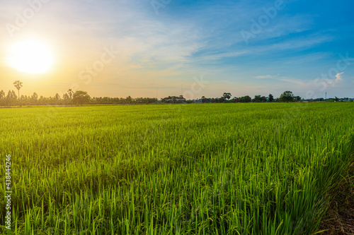 Foto Scenic view landscape of Rice field green grass with field cornfield or in Asia country agriculture harvest with fluffy clouds blue sky sunset evening background