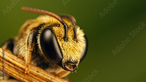 Photographie Test Bee